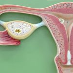 uterus on green background
