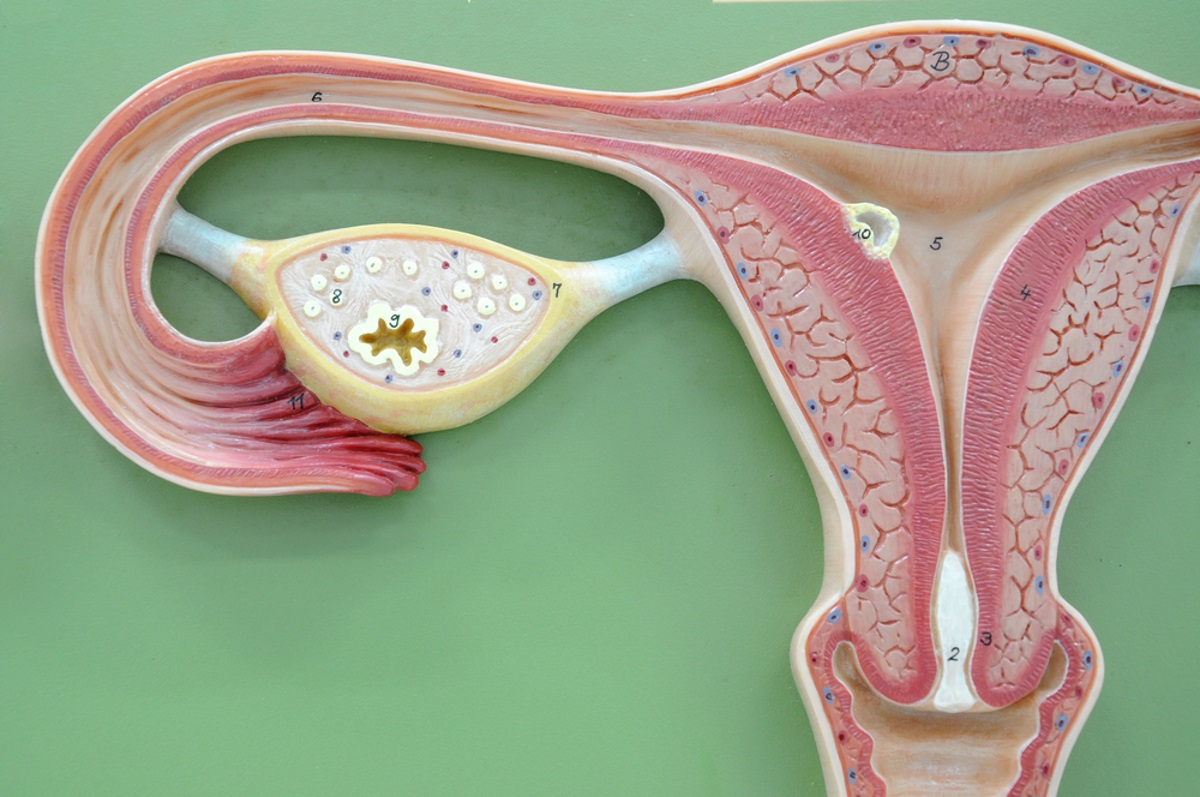 If You are Suffering From Fibroids, There are Things You Can Do, and Avoid, to Improve Your Quality of Life